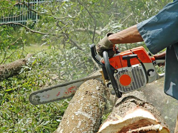 jakie-drzewa-mozna-wyciac-bez-zezwolenia