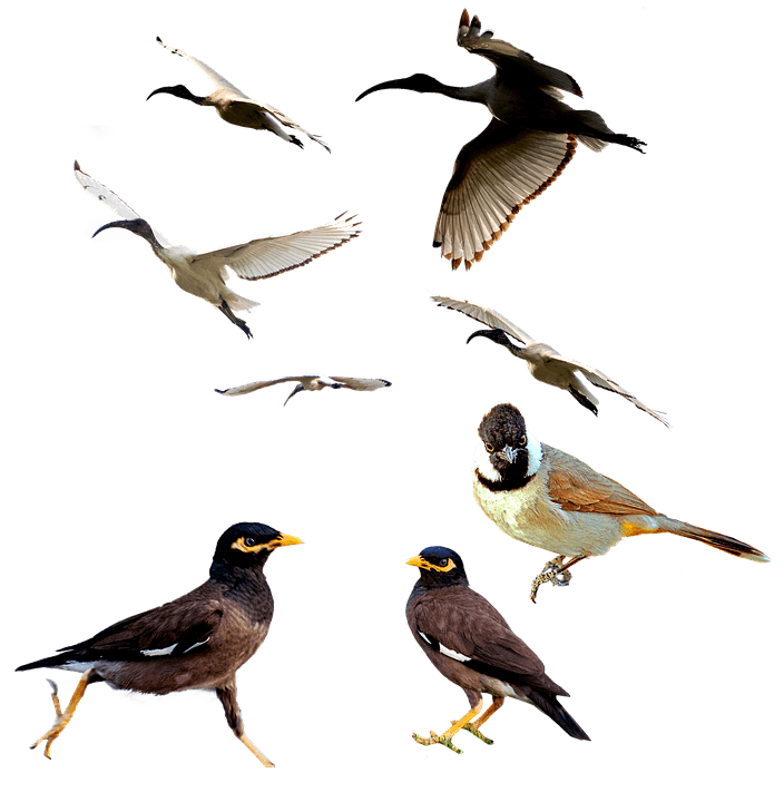 birds-2619488_960_720